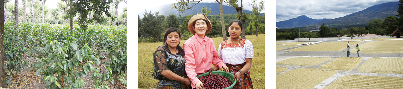 https://mikado-coffee.com/wp-content/uploads/2020/06/guatemala_m02.png